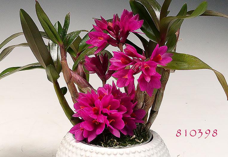 best sellers best sellers - Orchid