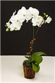 Premium White Phalaenopsis in Vintage Asian Bamboo Basket