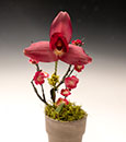 Regal Red Lycaste Gift
