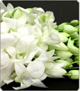 Classic White Dendrobium:  10 cut Flower Spikes