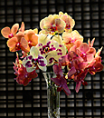 Cutting-Edge Phalaenopsis Mixed Bouquet- 5 Stems