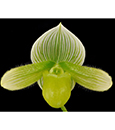 Paph. (Alma's Moth 'Green Sails' x esquirole album 'Emeralds In Snow')